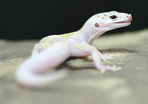March Gecko Photo Contest