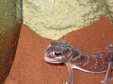 gecko-wall6