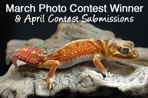 Photo Contest Update: March Winner & April Submissions