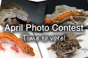 April Photo Contest: Vote Now!