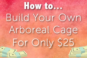 DIY: Build an Arboreal Cage for Only $25