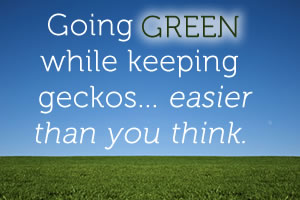 Going Green While Keeping Geckos