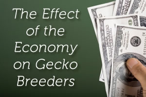 The Effect of the Economy on Gecko Breeders