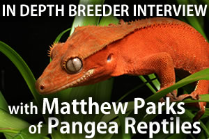 Interview with Matthew Parks of Pangea Reptile LLC