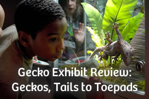 Gecko Exhibit Review: Geckos, Tails to Toepads