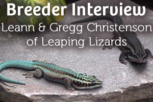 Interview with Leann & Gregg Christenson: Phelsuma