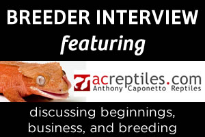 Breeder Interview:  Anthony Caponetto of ACReptiles.com