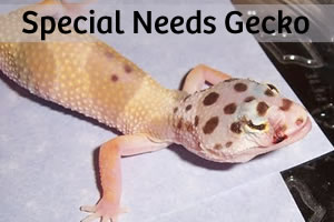 Sela: A Story of a Special Needs Gecko