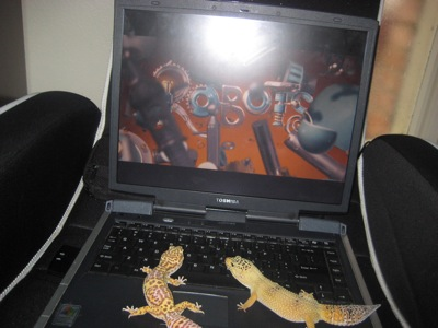 leopard geckos on laptop