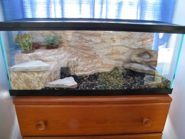 Diy Naturalistic Foam Fake Rock Enclosure Gecko Time