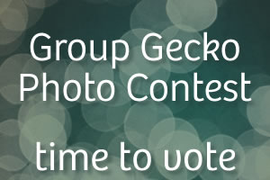 Vote Now: Group Gecko Photo Contest