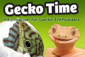 The All New Gecko Time