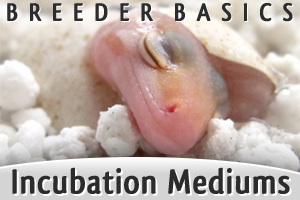 Beginner Breeder Basics: Comparing Incubation Mediums