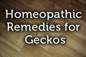 Homeopathic Remedies for Geckos