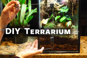 How to Build a Naturalistic Terrarium