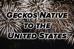 Happy Independence Day! Geckos Native to the U.S.