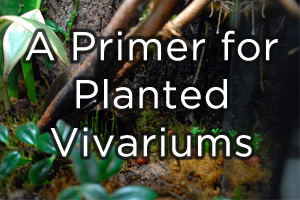 A Primer for Planted Vivariums