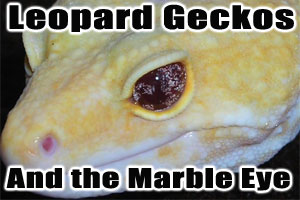 New Leopard Gecko Mutation: the Marble Eye