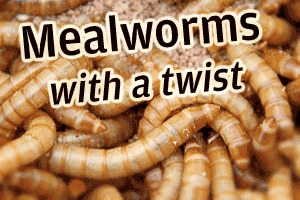 Reader's Question Answered: Mealworms with a Twist