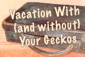 Going on Vacation With (and Without) Your Geckos