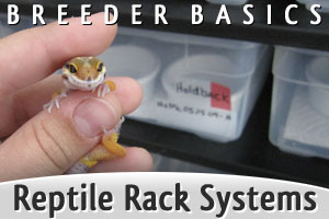Breeder Basics: Reptile Rack Systems