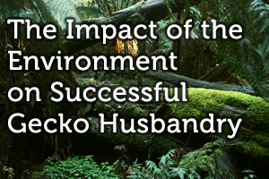 The Impact of the Environment on Successful Gecko Husbandry