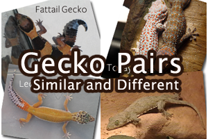 Gecko Pairs: Similar and Different