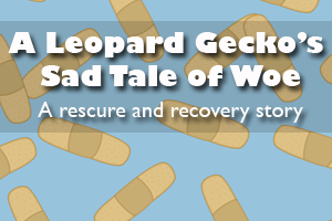 A Leopard Gecko's Sad Tale of Woe