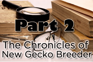 The Chronicles of a New Gecko Breeder – Part 2