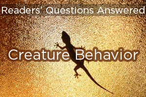 Readers' Questions Answered: Creature Behavior