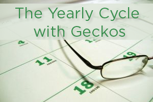 The Yearly Cycle with Geckos