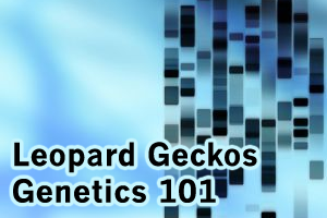 Fun with Hets: Leopard Geckos Teach Genetics 101