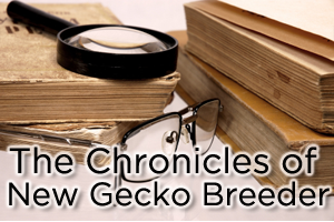 Breeder Chronicles: Gecko Management Tips