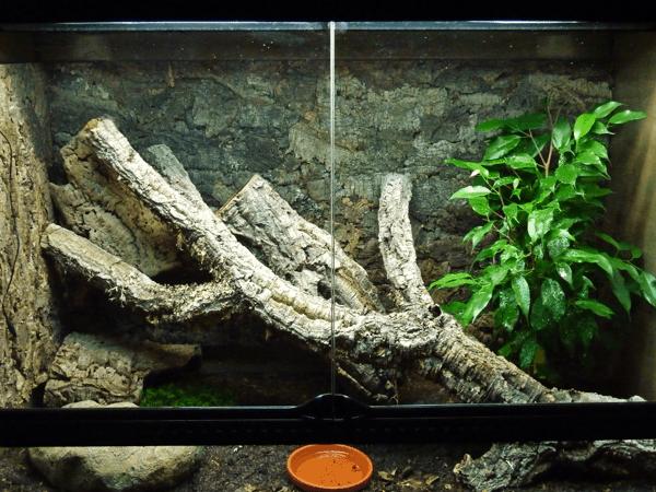 Goniurosaurus Terrarium