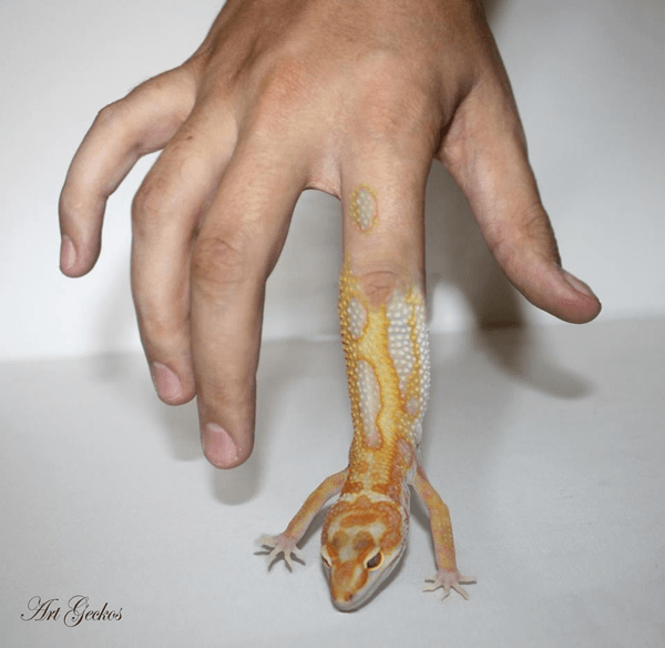Art Geckos Finger.indexed