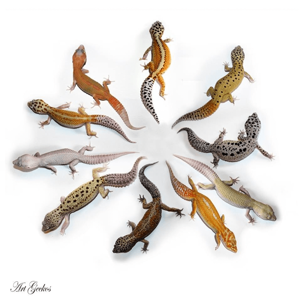 Art Geckos.indexed