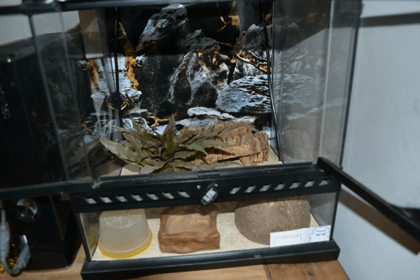 Viper Gecko Setup