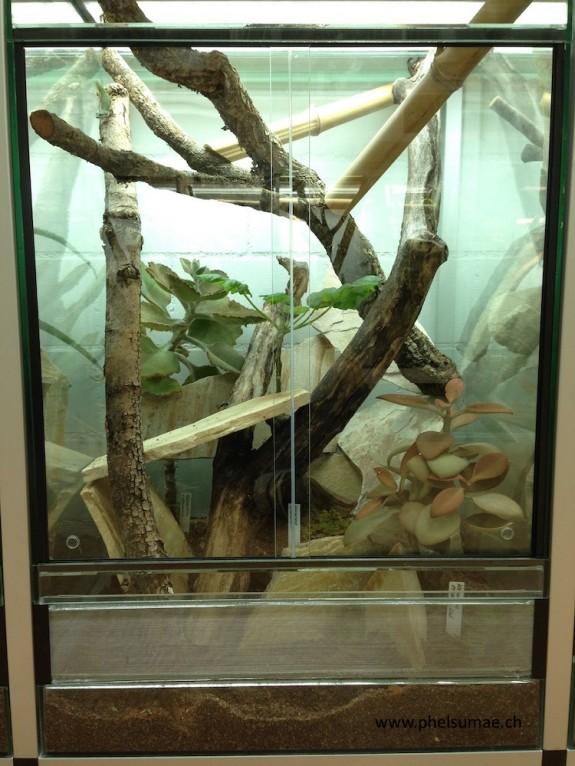 Phelsuma malamakibo Terrarium