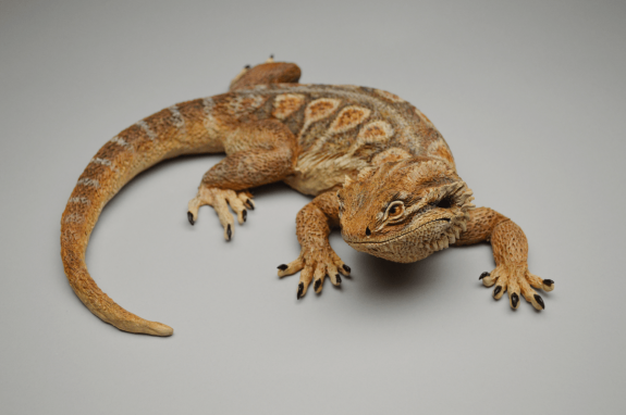 Bearded dragon sculpture
