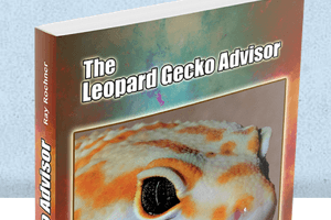 The Leopard Gecko Advisor Talks about Lighting and Eggs