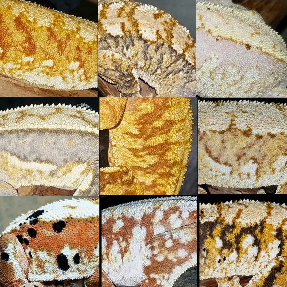 "Crestie ""skins"" from Tom Favazza"